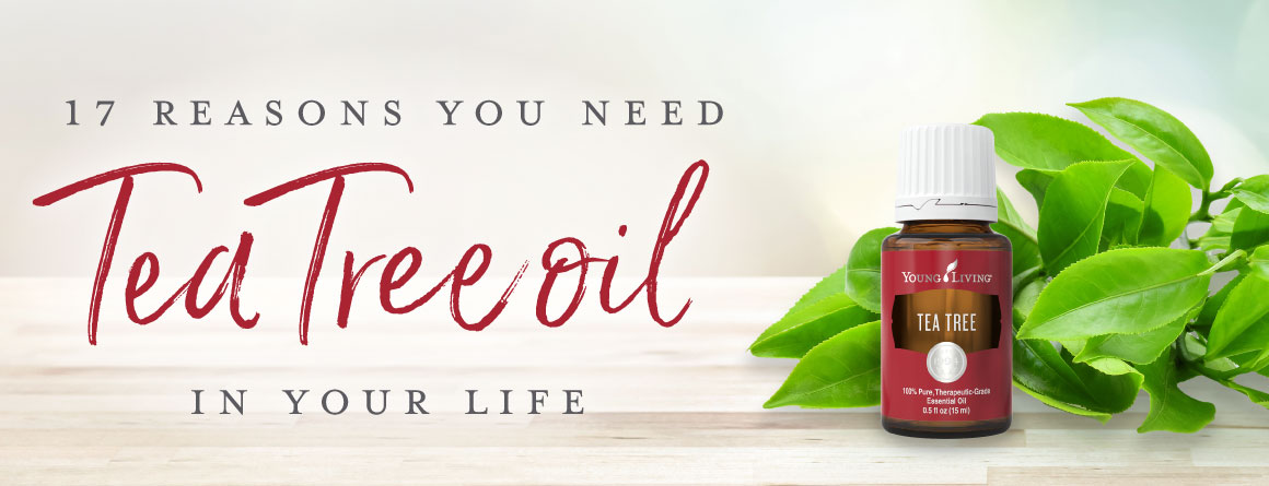 Tea Tree oil | Young Living Essential Oils