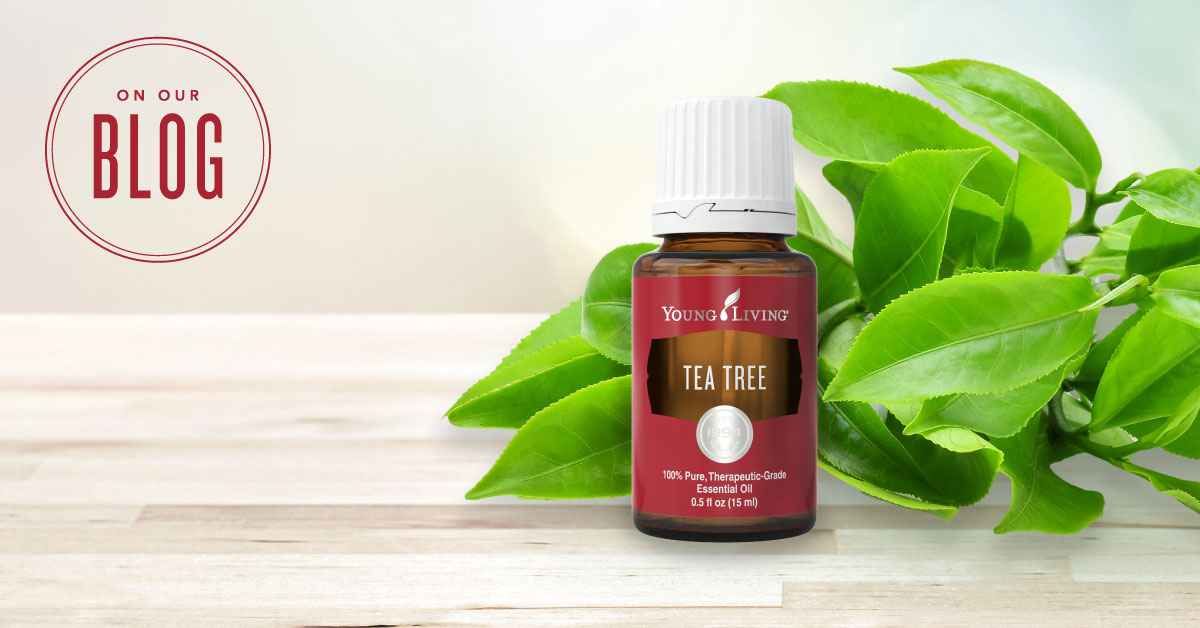 Everyday Ways To Use Tea Tree Oil Young Living Essential Oils