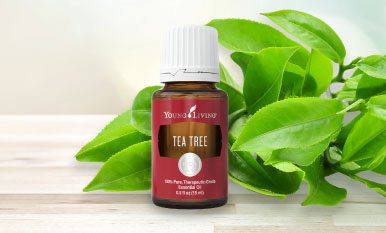 17 reasons you need Tea Tree oil in your life
