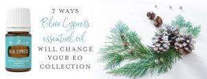 7 ways Blue Cypress essential oil will change your EO collection