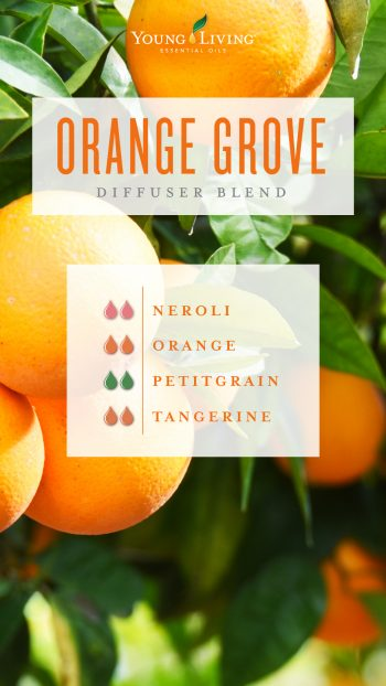 Orange grove diffuser blend