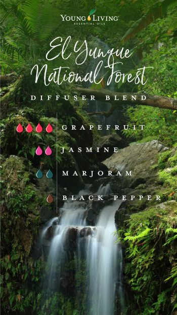 El Yunque National Forest diffuser blend