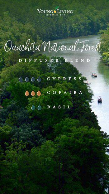 Ouachita national forest diffsuer blend