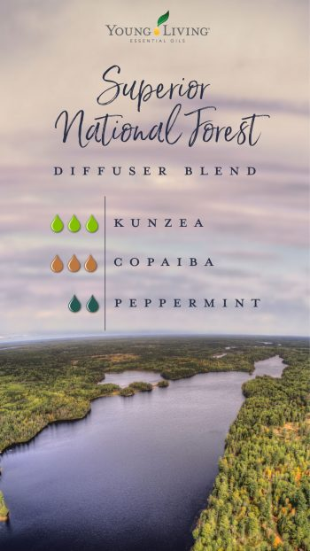 Superior National Forest diffuser blend