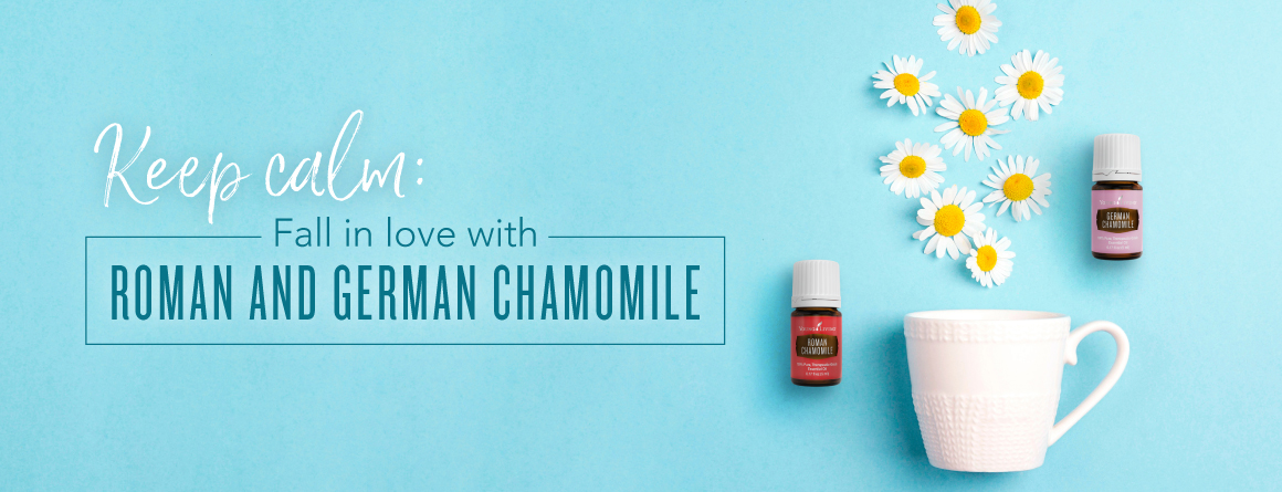 Chamomile Essential Oil Young Living Blog