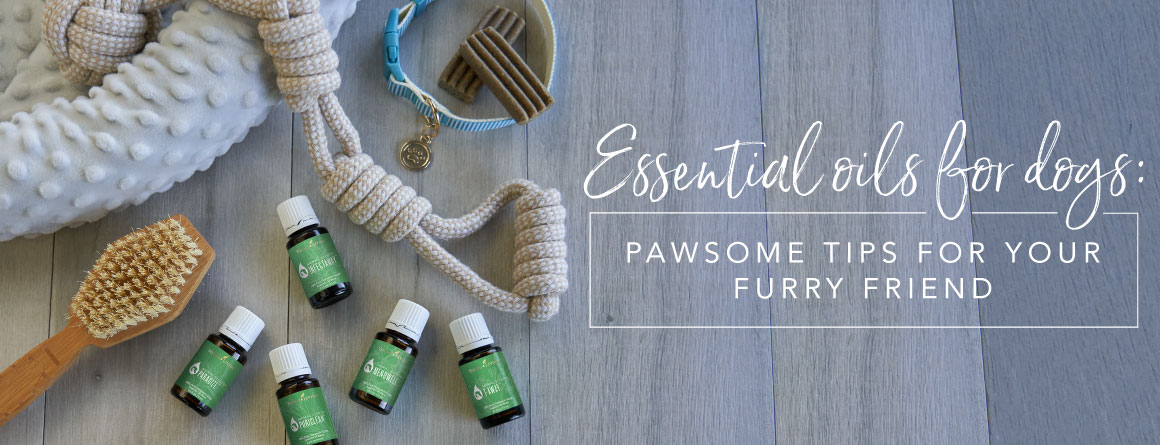Essential oils for dogs: Pawsome tips for your furry friend