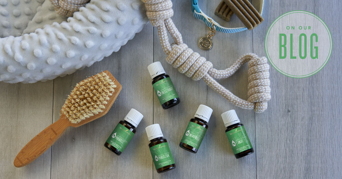 Essential Oils For Dogs Young Living Blog