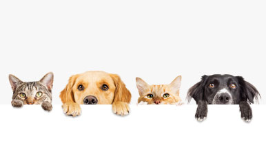 Essential Oils and Pets: A Quick How-To