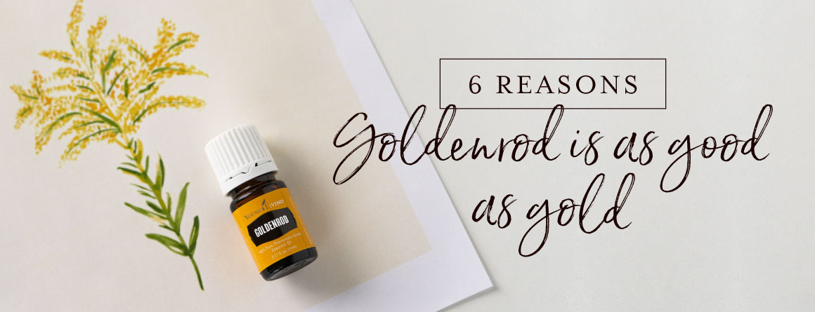 6 reasons Goldenrod is as good as gold