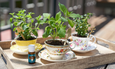 Superb herbs! 28 uses for herbal essential oils