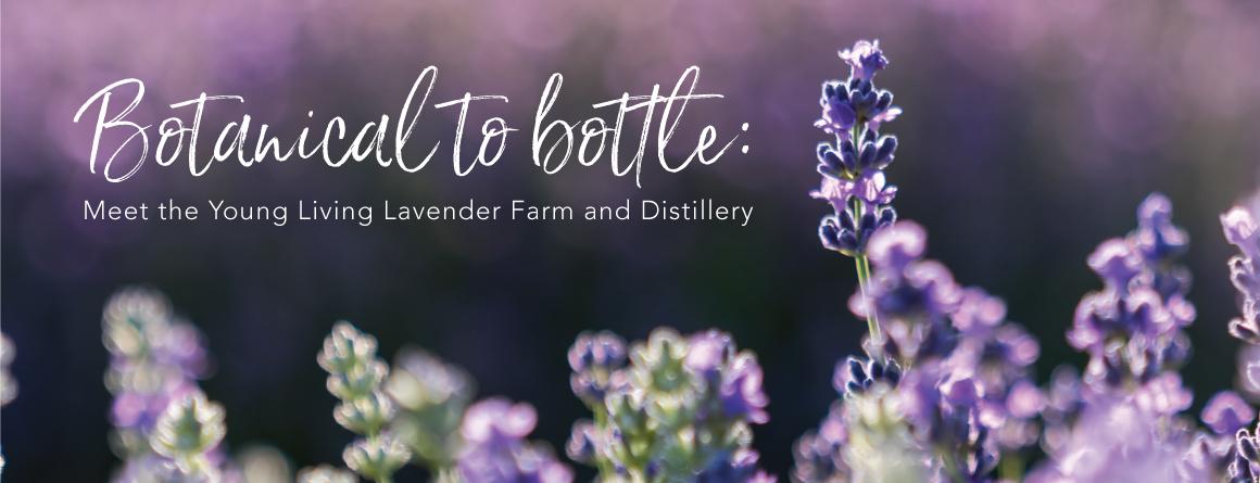 close up shot of lavender plant