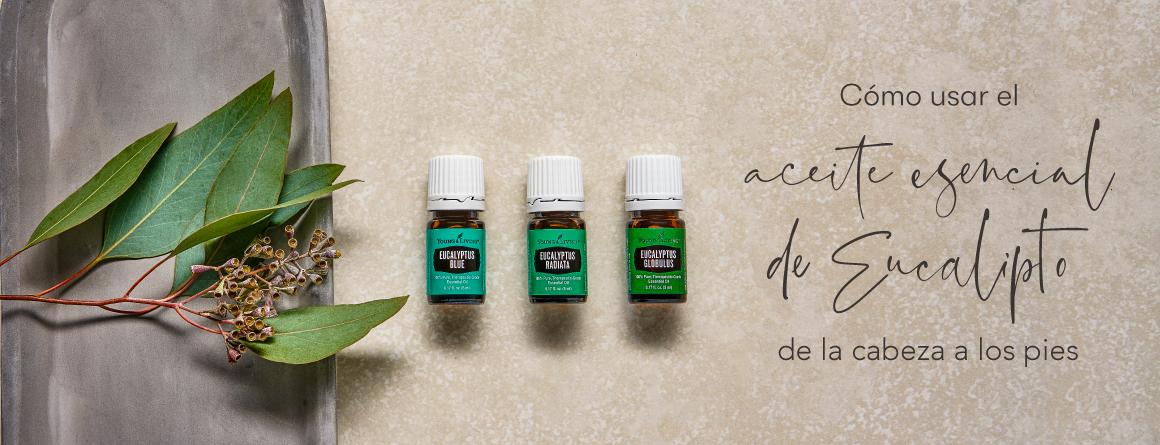 Cómo usar el aceite esencial de Eucalipto de la cabeza a los pies