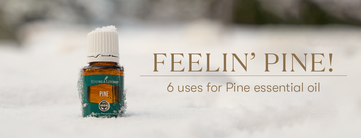 6 uses for pine