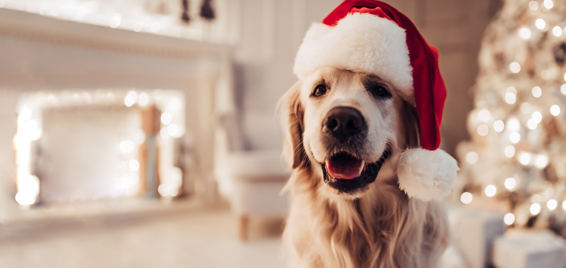 Furry and bright: 5 holiday survival tips for your four-legged friends