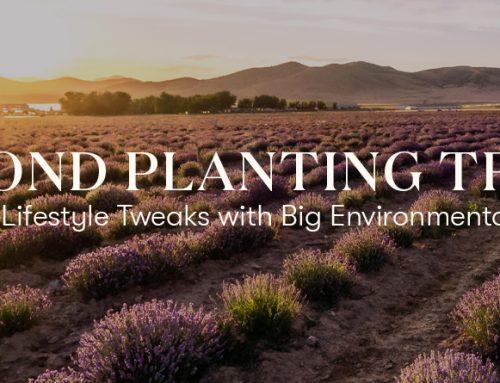 Beyond Planting Trees: 15 Simple Lifestyle Tweaks with Big Environmental Impacts