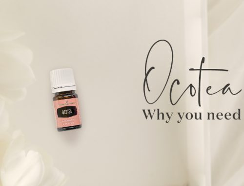 Ocotea essential oil: Why you need this spicy EO