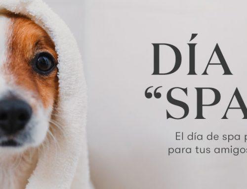 """Dia de """"SPAW"""": El día de spa perfecto para tus amigos peludos"""