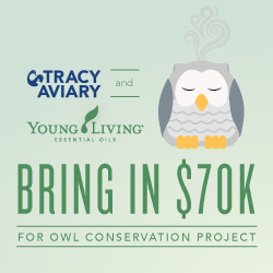 Tracy Aviary and Young Living bring in $70k for Owl Conservation Project